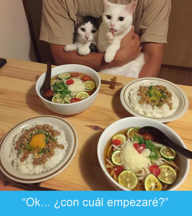 Expresiones-gato-(Dos gatos mirando una mesa con mucha comida