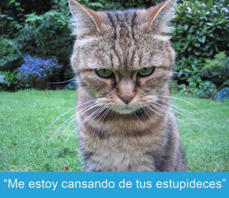 Expresiones-gato-(Gato con cara de enojo
