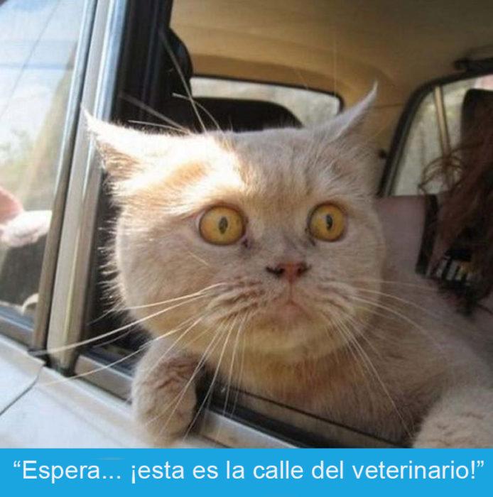 Expresiones-gato- Gato con cara de susto