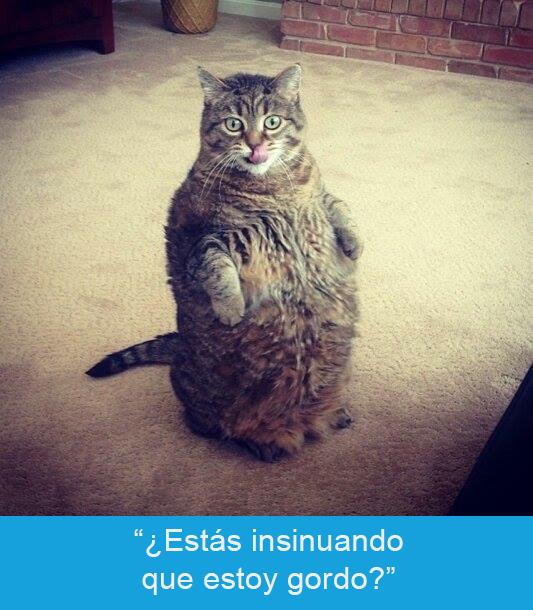 Expresiones-gato-(Gato gordito en dos patas