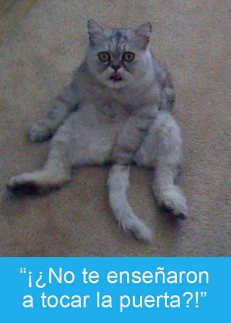 Expresiones-gato- Gato manoseándose