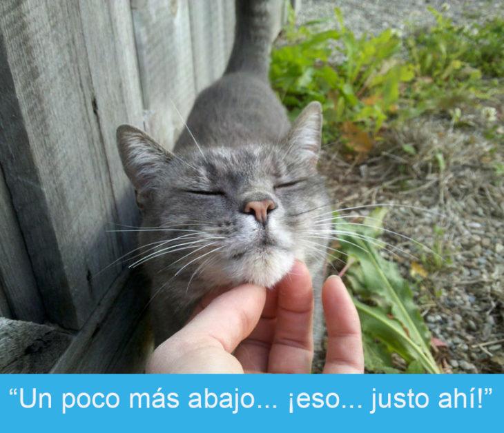 Expresiones-gato- Gato mientras le hacne caricias