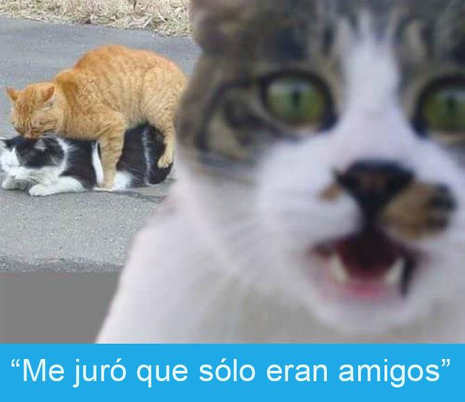 Expresiones-gato- Gato sorprendido mientras dos gatos atrás están montados