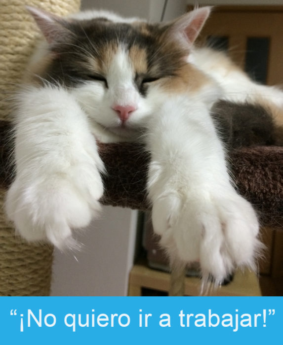Expresiones-gato- Gato dormido