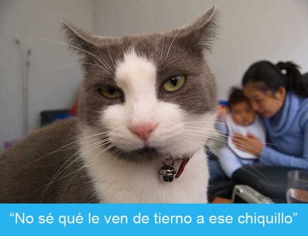 Expresiones-gato-(Gato con cara de fastidio, atrás se ve una mamá y un bebé