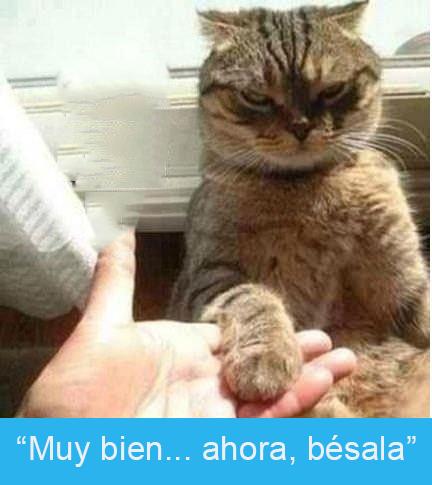 Expresiones-gato-(Gato dándole la pata a su dueño