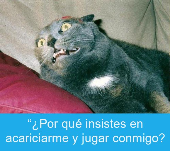 Expresiones-gato-(Gato con cara de desesperación