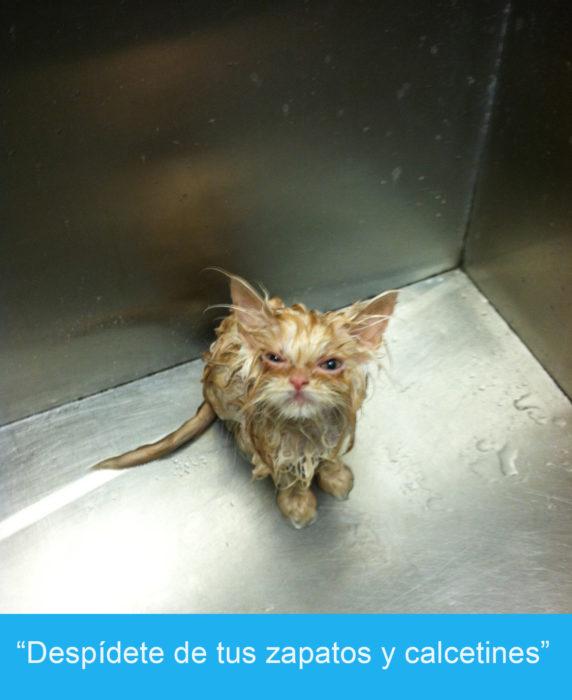 Expresiones-gato-(Gato mojado con cara de enojo