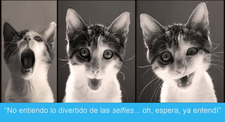 Expresiones-gato- Selfie de gato