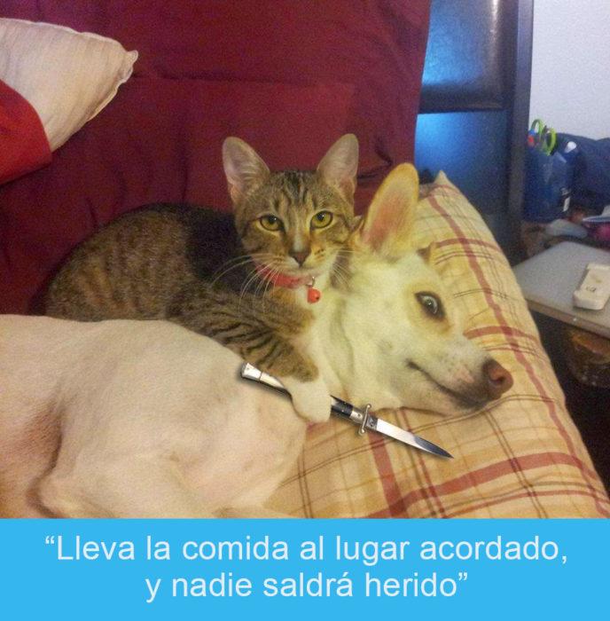 Expresiones-gato-(Gato amenazando a un perro con un cuchillo
