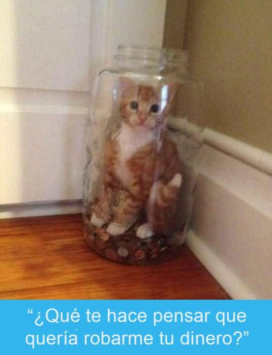 Expresiones-gato- Gato adentro de un jarrón con dinero