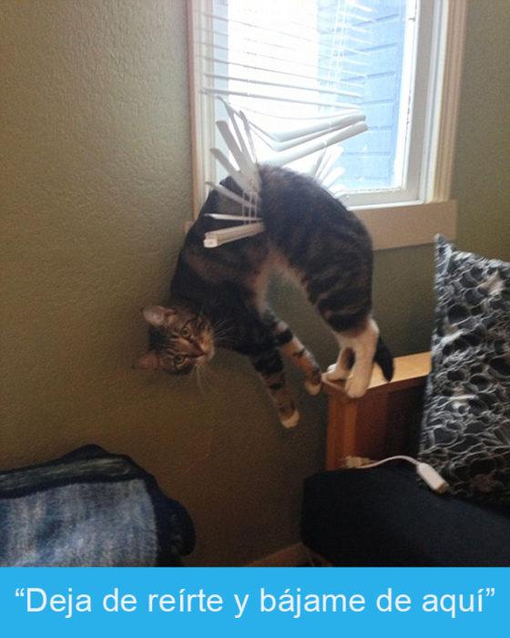 Expresiones-gato-(Gato atorado en las persianas d ela ventana