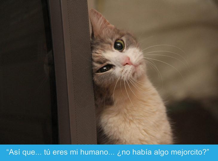 Expresiones-gato Gato tierno mientras está recargado en una superficie