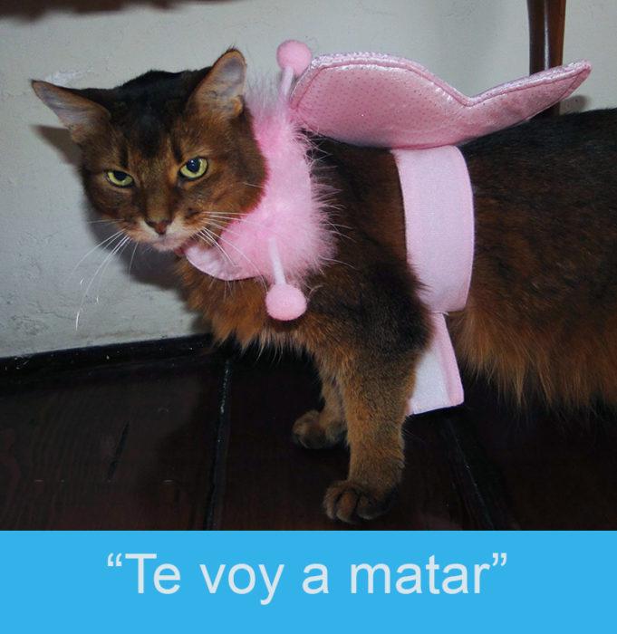 Expresiones-gatos- Gato en un traje de hada