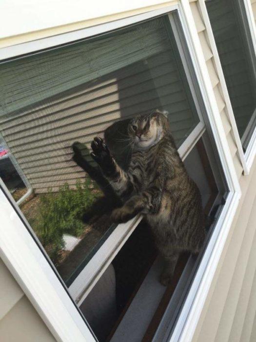 gato atrapado en laventara