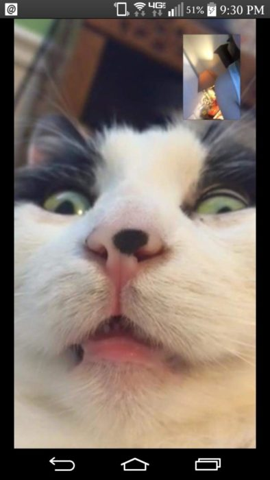 gato tomandose una selfie