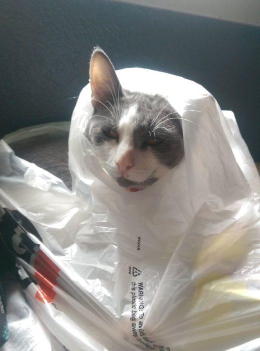 gato dentro de una bolsa