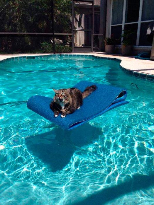 gato en el agua