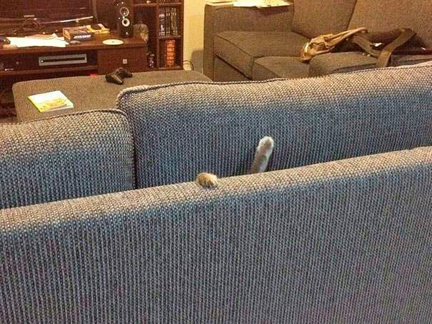 gato dentro del sillón