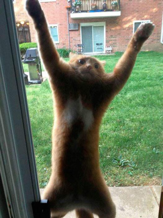 gato atorado en la puerta