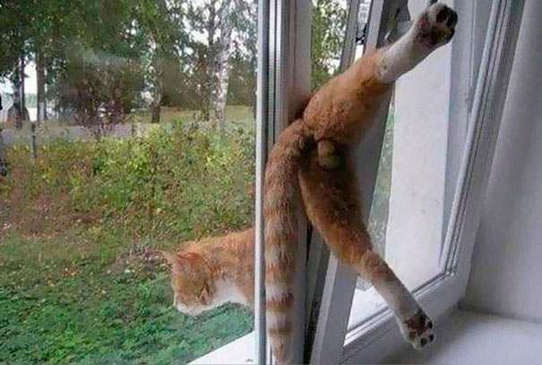 gato que sale por las rendijas