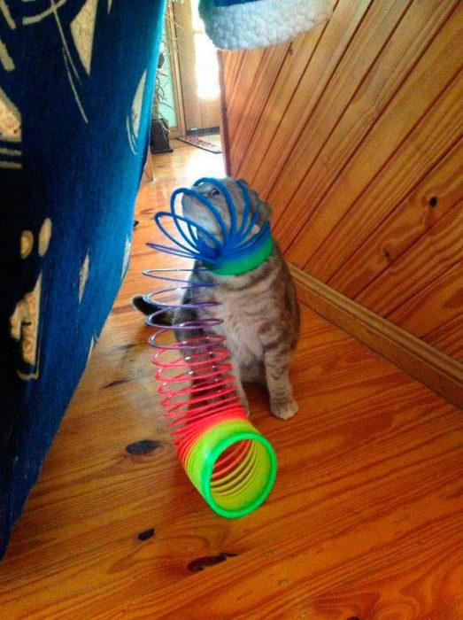 gato jugando con unos aros