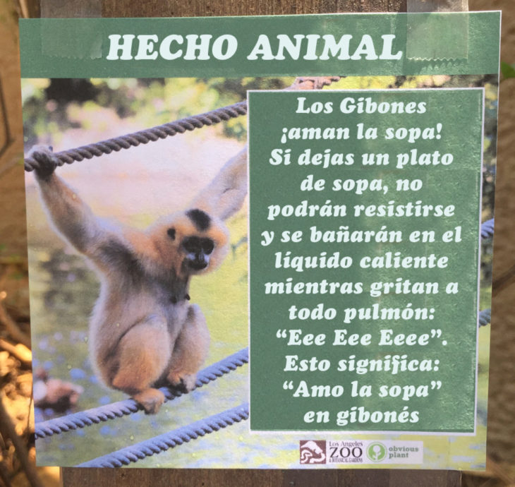 Gibones aman la sopa hecho animal