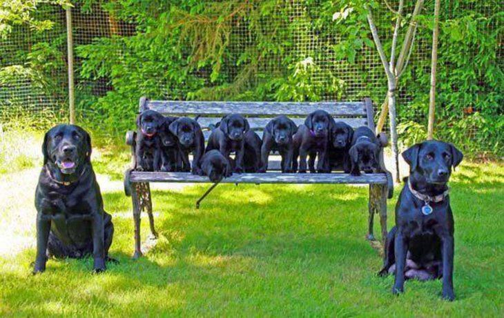 perritos negro obedientes