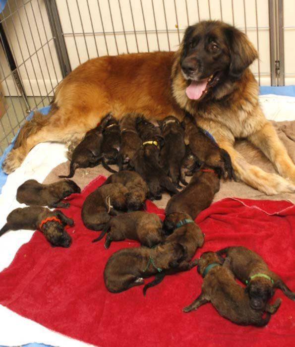 mamá con muchísimos cachorros