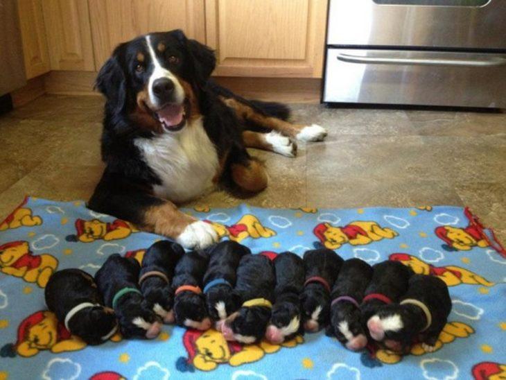 perritos en fila con collares de colores frente a sus madres