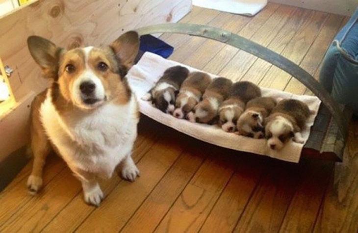 perrita mostrando a sus cachorros en una cnasta