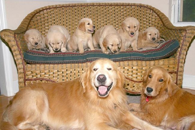 perros mostrando a sus hijos