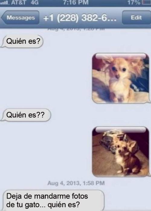 Mensajes equivocados. Deja de mandarme fotos de tu gato