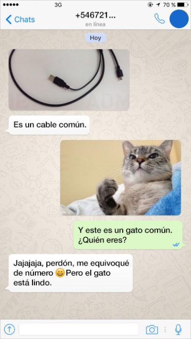 Mensajes equivocados. Un cable común, un gato común