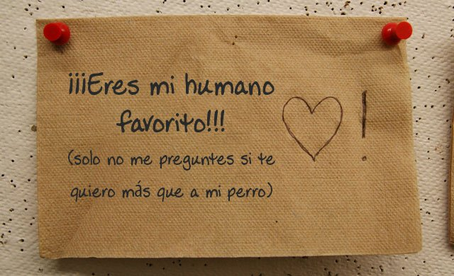 Eres mi humano favorito