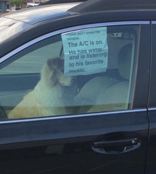 foto original del perrito rescatado