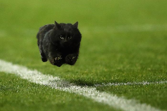gatito corriendo por el campofoto original