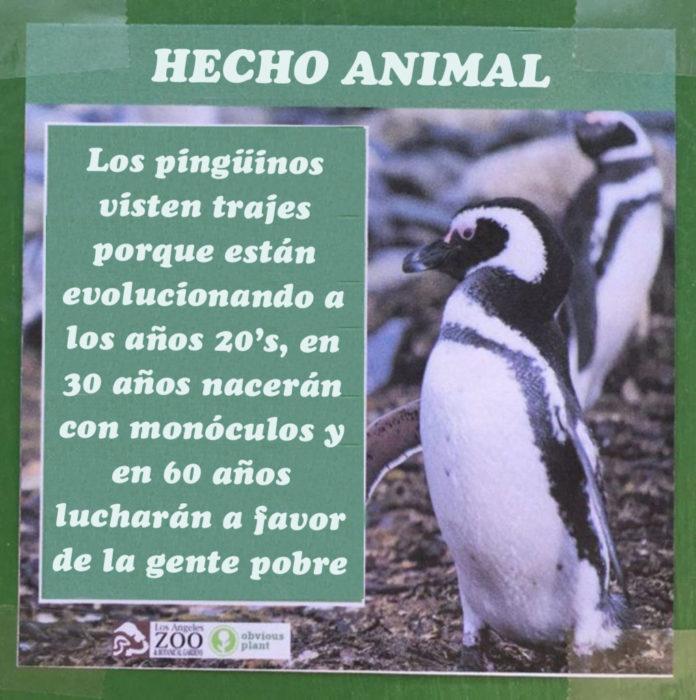 Pinguinos hecho animal evolucionan a los años 20's
