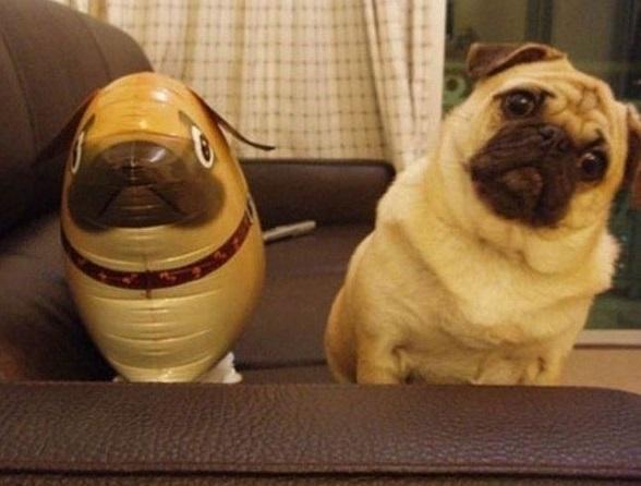 pug con su globo de pug