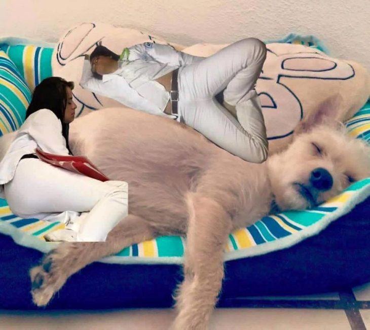 Pasante medicina se queda dormido. Photoshop perro