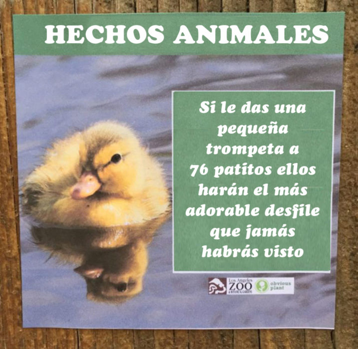 Patitos con trompetas hecho animal