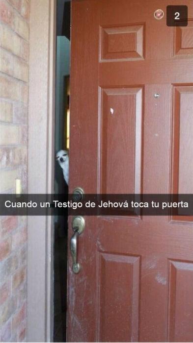 Snapchat Divertidos. Un perro asomándose por una puerta