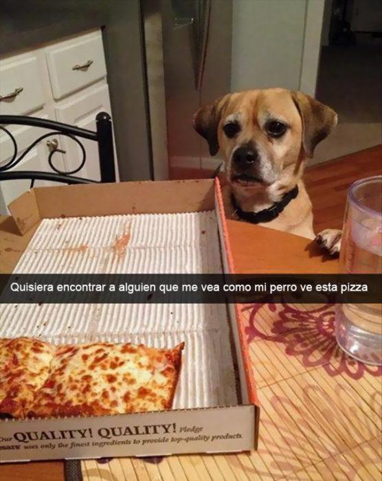 Snapchat Divertidos. Perro viendo fijamente una pizza