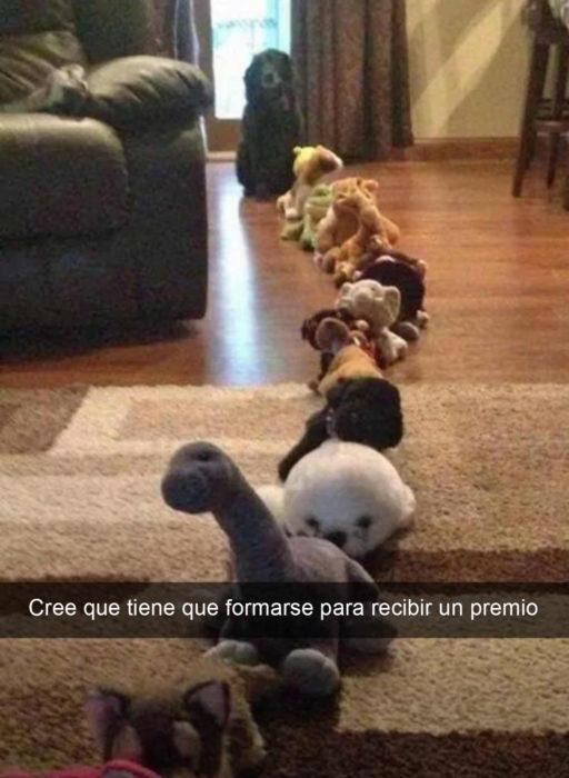 Snapchat Divertidos. Perro formado en fila detrás de peluches