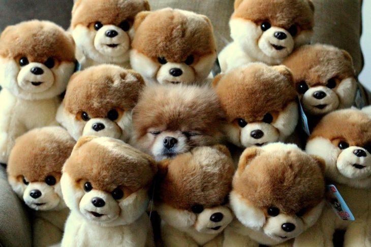 Perro escondido en muñecos
