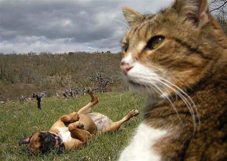 Gato muy serio con perro