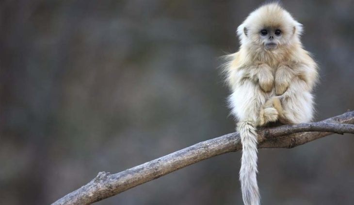 Mono pensando de la vida
