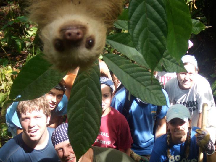 Lemur asomándose a foto