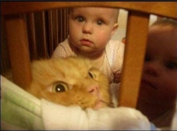 Gato metido en la cuna con dos gemelos