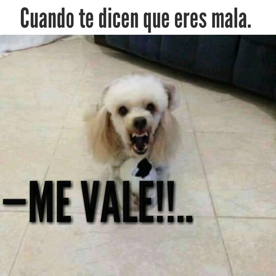 La perra de las aguitas valencia edo carabobo venezuela - 2 1